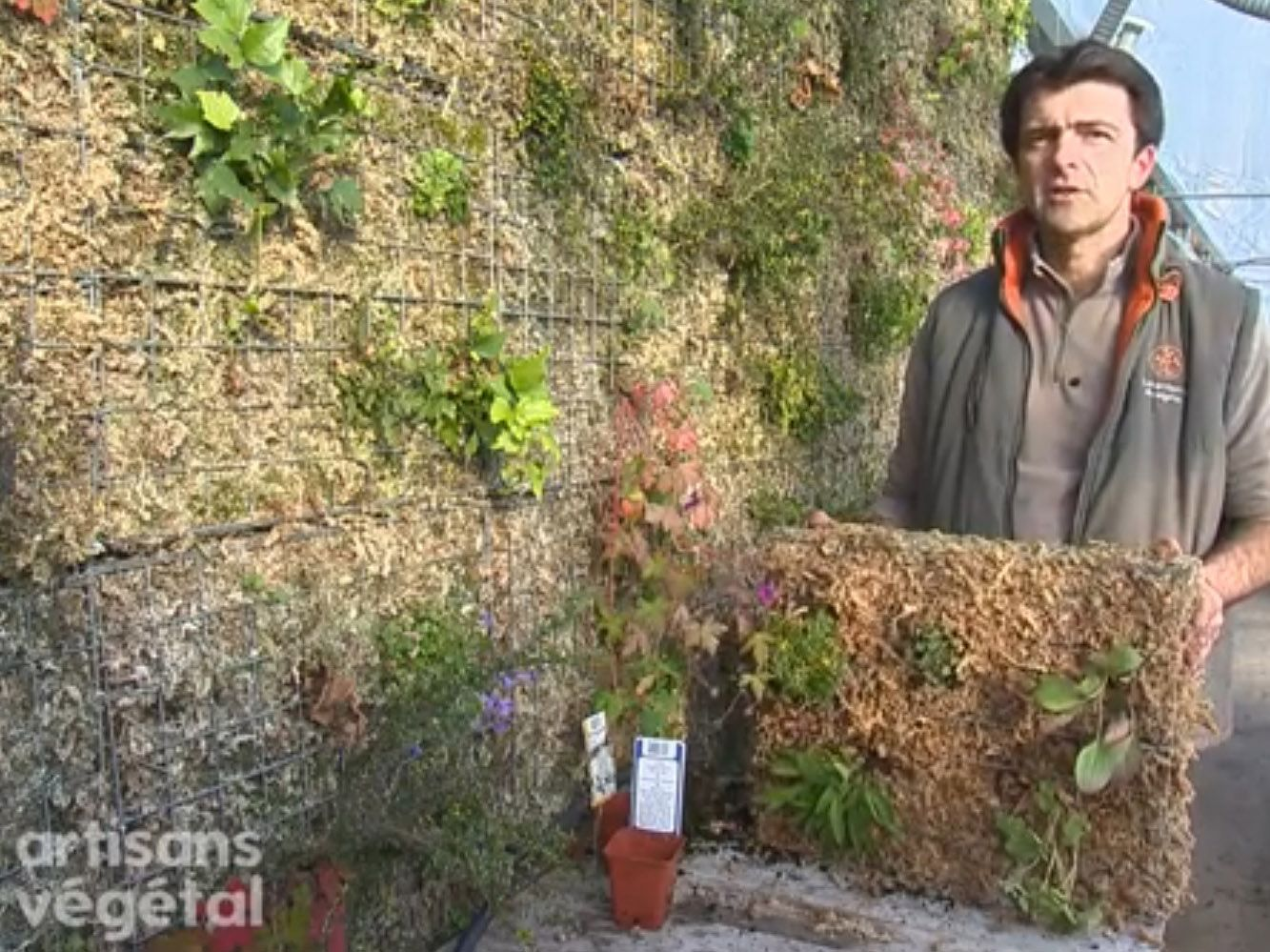 Mur Vegetal Plante Grasse comment faire un mur végétal ?